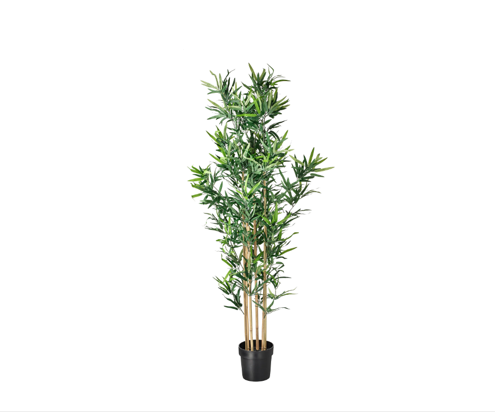 bamboeplant-999